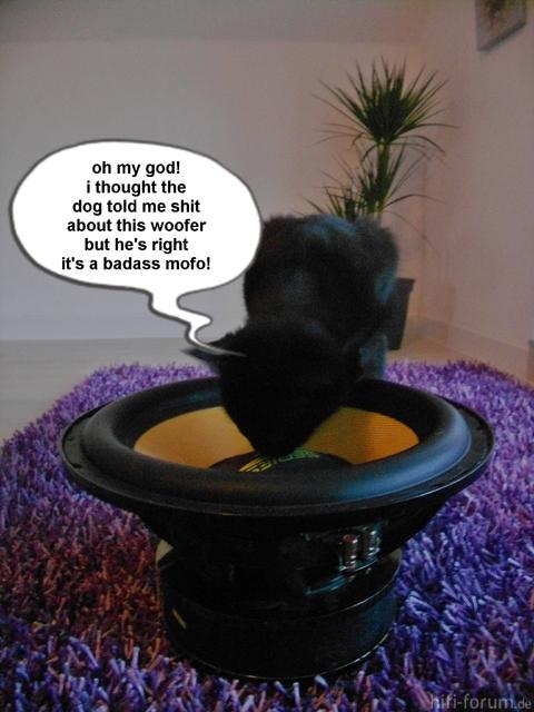 Subwoofer Katze