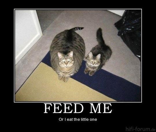 Funny Fat Thin Cat Food