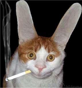 Katze,ohren