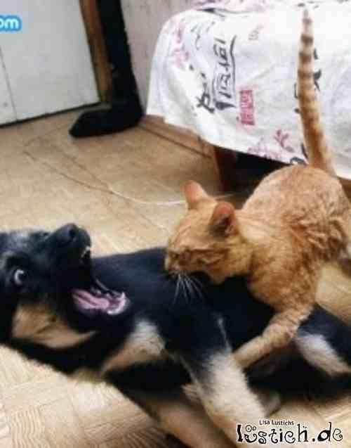 16681 Angriff Der Killer Katze