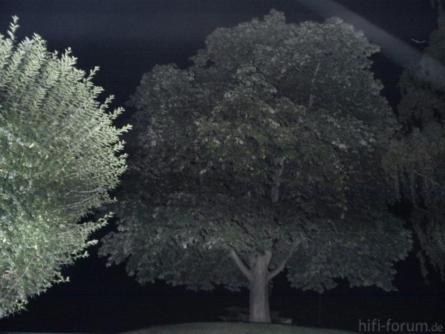 Strobe - Baum