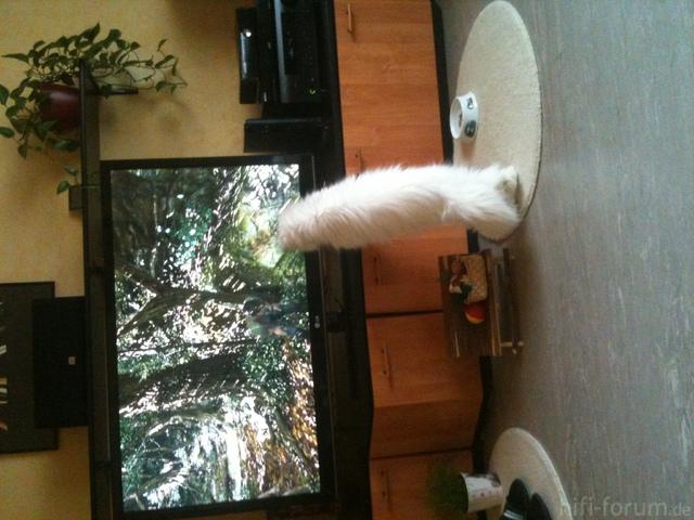 Katze Untersucht TV