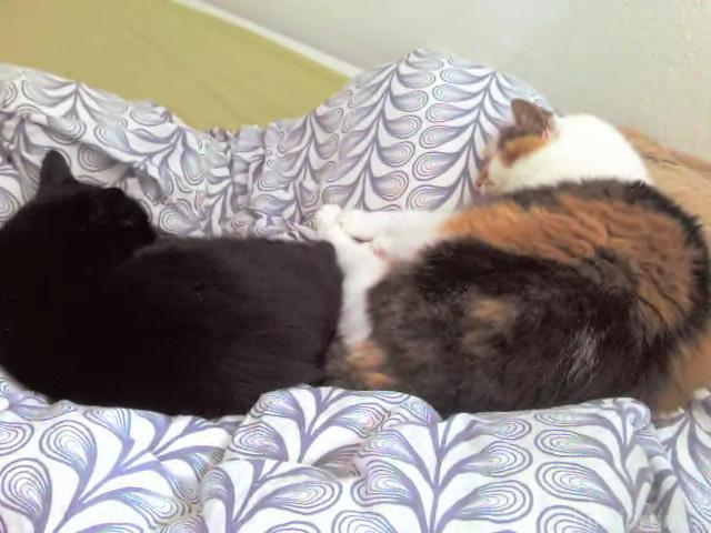 Katzen ;)