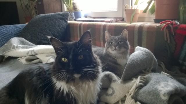 Fritz+Kili