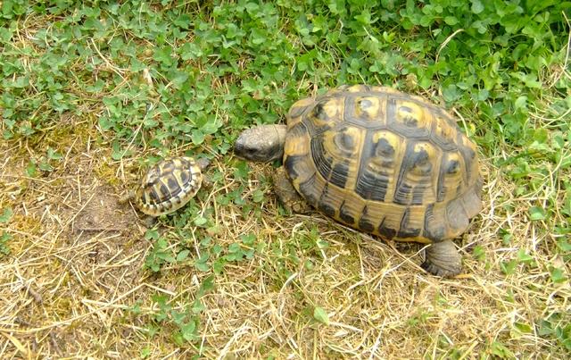 Schildkröte August19