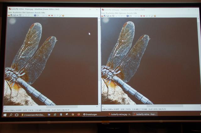UHD42 - Foto von Leinwand mit 2 identischen Motiven