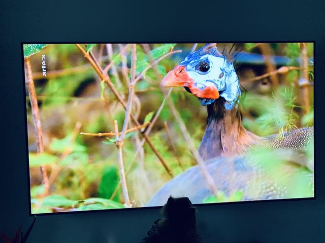 Fernsehbild - Korrekte Darstellung