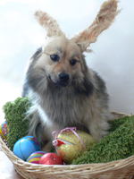 frohe ostern13