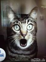 Katze staunt