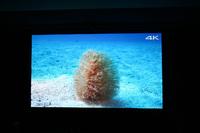 Screen 4k 16zu9